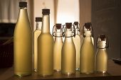picture of elderflower  - Bottles filled with elderflower syrup, shot against the light