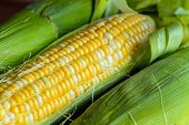 stock photo of corn  - Sweet yellow corn on cob with leaves and husk