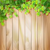 foto of wooden fence  - Green leaves on a wood texture - JPG