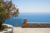 picture of oleander  - Mediterranean sea and oleander flower background  - JPG