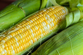 picture of sweet-corn  - Sweet yellow corn on cob with leaves and husk  - JPG