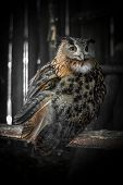 picture of nocturnal animal  - A nocturnal bird of prey imprisoned in his sad cage at the zoo - JPG