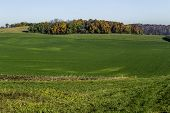 stock photo of fall trees  - A green field with fall trees in the background - JPG
