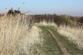 stock photo of marshlands  - Path trough the marshland on the Island of Sylt in Early spring - JPG
