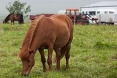 picture of iceland farm  - Icelandic red horse standing next to a farm - JPG