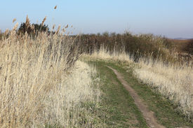 image of marshlands  - Path trough the marshland on the Island of Sylt in Early spring - JPG