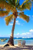 stock photo of caribbean  - Beautiful caribbean beach on Saona island Dominican Republic - JPG