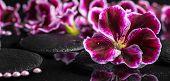 foto of geranium  - beautiful spa background of geranium flower beads and black zen stones with drops in reflection water Royal Pelargonium panorama - JPG