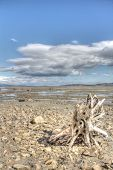 image of arctic landscape  - Summer arctic landscape with lake mountains and dry tree root - JPG