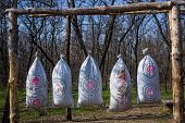 picture of archery  - Archery on target in the woods in early spring - JPG