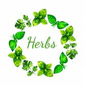 foto of oregano  - Realistic watercolor illustration herbs wreath. Basil. Parsley. 