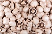 stock photo of edible mushroom  - raw fresh edible  healthy mushrooms - JPG