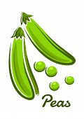 picture of pea  - Fresh green peas vegetable with open pods and round beans in cartoon style with text Peas for vegetarian concept design - JPG