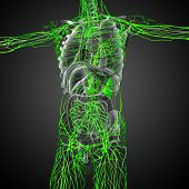 stock photo of nod  - 3d render medical illustration of the lymphatic system  - JPG
