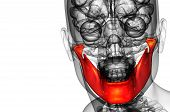 image of jaw-bone  - 3d rendered illustration  - JPG