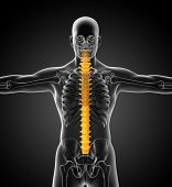 pic of lumbar spine  - 3d render medical illustration of the human spine  - JPG