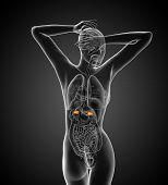 picture of urethra  - 3d render medical illustration of the adrenal  - JPG