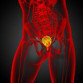 image of bladder  - 3d render medical illustration of the bladder  - JPG