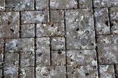 picture of pooping  - Pattern of park tile with bird poop - JPG