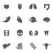 picture of human internal organ  - Set of human organs icons vector illustration - JPG