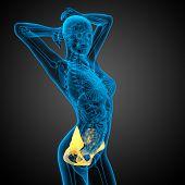pic of pelvis  - 3D medical illustration of the pelvis bone - JPG