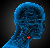 stock photo of larynx  - 3d render medical illustration of the larynx  - JPG
