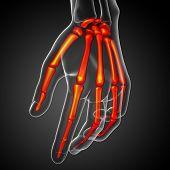 Picture of 3d render illustration of the skeleton hand.