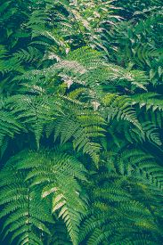 stock photo of fern  - Beautiful green fern and sunlight at forest - JPG