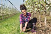 Farmer Girl Weeding Around Fruit Trees poster