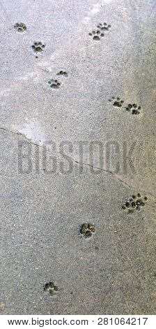 Imprints Of A Cats Paw