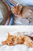 Fluffy Cat Before And After Adoption In Home. Dirty Stray Kitten Is Slepping On Construction Site. P poster