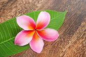 foto of plumeria flower  - Tropical Plumeria with Green Leaf on texture wooden table for spa and wellness concept - JPG