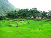stock photo of ifugao  - A village in Batad amidst the rice terraces in Ifugao province Philippines - JPG