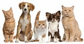 stock photo of tan lines  - Group of cats and dogs in front of white background - JPG