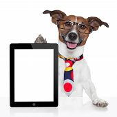 stock photo of working animal  - business dog tablet pc ebook computer notebook - JPG