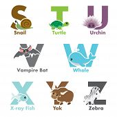 stock photo of x-ray fish  - A vector illustration of alphabet animals from S to Z - JPG