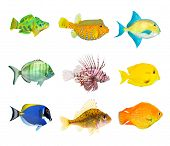 foto of aquatic animal  - Great collection of a tropical fish on a white background - JPG