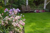 stock photo of cluster  - Clusters of pink and white tea roses by a lush green lawn with two rustic chairs waiting for you in the background - JPG