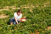 foto of strawberry blonde  - Young woman on organic strawberry farm in summer picking berries - JPG