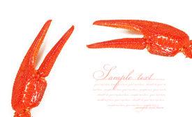 image of crawdads  - Claws crayfish closeup - JPG