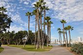 stock photo of washingtonia  - Palm Trees at Coronado Island in San Diego - JPG