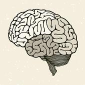stock photo of cerebrum  - Human brain vector illustration for your design - JPG