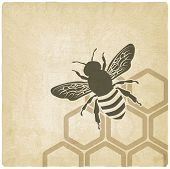 foto of insect  - bee old background  - JPG