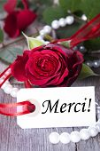 image of mother-of-pearl  - Background with Rose and Pearls and the French Word Merci which means Thanks - JPG