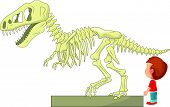 picture of dinosaur skeleton  - vector illustration of Boy with dinosaur skeleton at the museum - JPG
