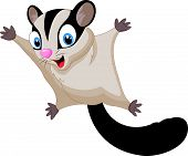 stock photo of possum  - Vector illustration of Sugar glider cartoon isolated on white background - JPG