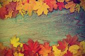 foto of seasonal  - Frame from vivid colorful autumn leaves on the grunge wooden cyan desk - JPG