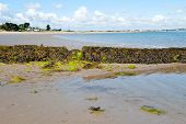 picture of irish moss  - View on Sutton beach in Howth peninsula Ireland  - JPG