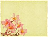 foto of frangipani  - Frangipani or plumeria tropical flower with old grunge antique paper - JPG