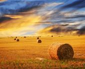 image of fall-wheat  - Golden sunset over farm field with hay bales - JPG